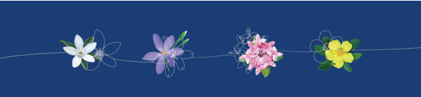 Lifeline Soith Coast Virtual Garden